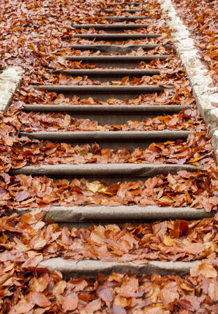 Stone stairs path through fall colored trees