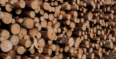 A pile of wood to burn in the fire place Zdjęcie Seryjne