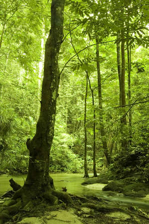 green forest and river Stock Photo - 2831524