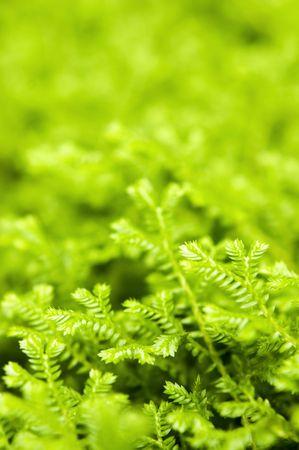 green ferns closeup photo