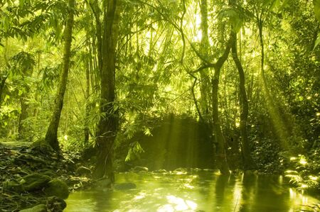 sunbeam in green forest with water reflection in mornin photo