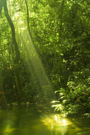 sunbeam in green forest with water reflection in morning photo