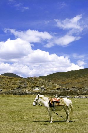 white horse stand on the grassland Stock Photo - 2835470