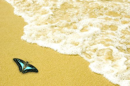 beach butterfly: blue butterfly on golden sand beach
