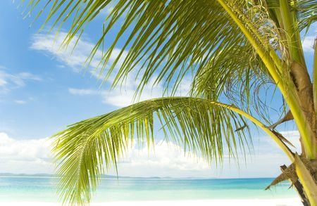 Summer holidays. Palm tree, white sand and turquoise sea Stock Photo - 2835425