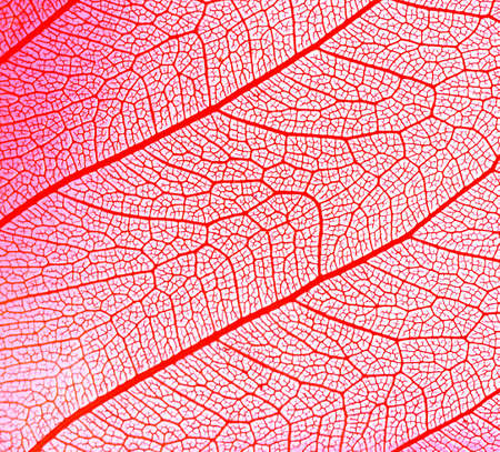 leaf abstract photo
