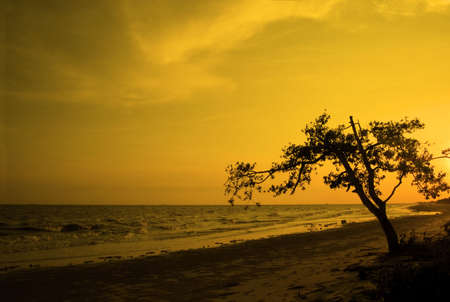 tree silhouette in sunset at beach photo