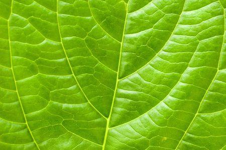 Macro leaf Stock Photo - 3194854