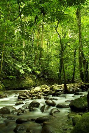 strumień: zielonych lasów i rzek Zdjęcie Seryjne