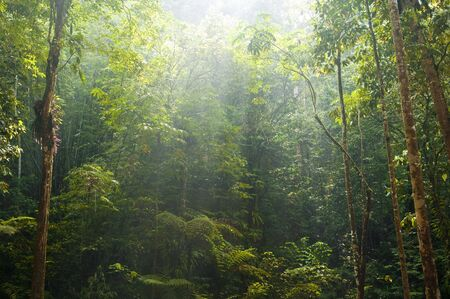 green forest with morning sunlight Stock Photo