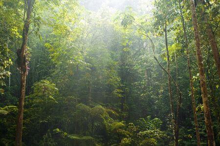 green forest with morning sunlight 版權商用圖片