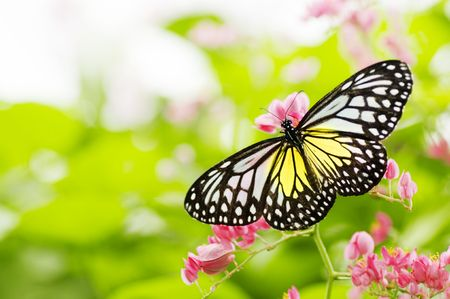 pink butterfly: butterfly on a flower