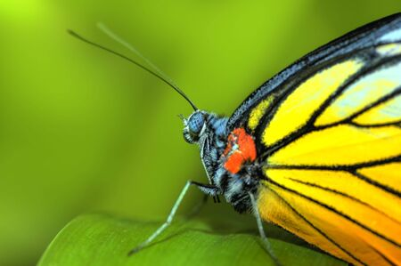 A butterfly resting on a plant