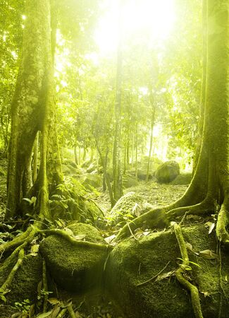 Green forest with ray of light photo