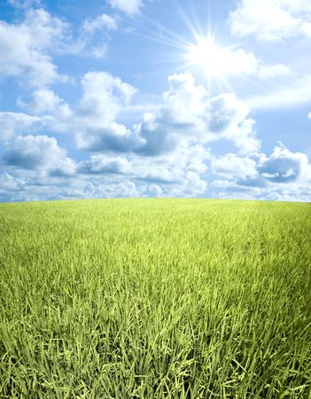Landscape of young paddy field Stock Photo - 4440760