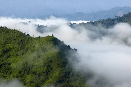 Green forest in misty morning photo