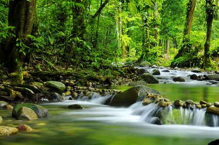 Mountain stream in a tropical rain forest. Imagens