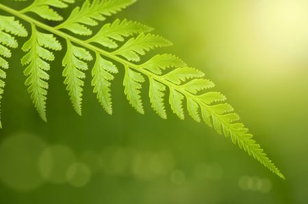 fern: Rain forest after the rain in a morning. Stock Photo