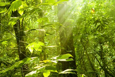 early summer: Golden sunray in green forest at early morning.