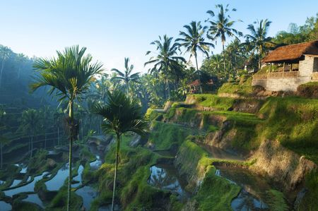 Terrace rice fields in morning sunrise, Bali, Indonesia. Stock Photo