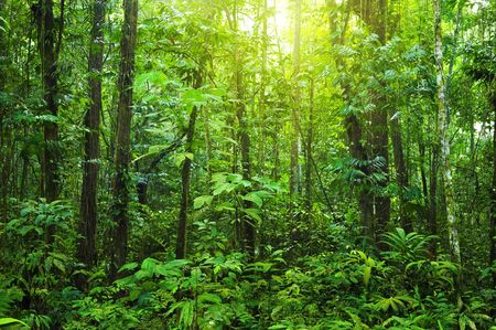 dense forest: Tropical dense forest with morning sunlight shine on to it.