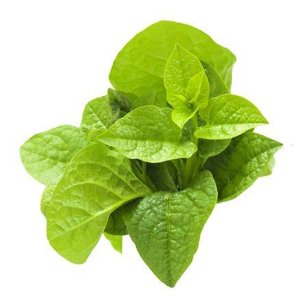 spinaci: Malabar spinaci isolated on white.
