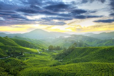 highlands: Tea Plantations at Cameron Highlands Malaysia. Sunrise in early morning with fog. Stock Photo