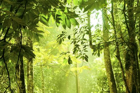 tropical rainforest: Tropical dense forest with morning sunlight shine on to it.