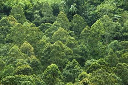 Tropical rainforest view in Malaysia.