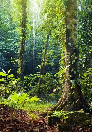 Morning sunbeam shine thru the green forest. photo