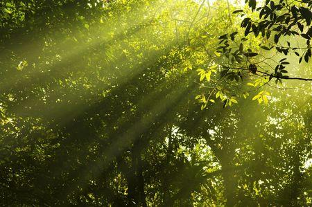 Golden morning sunbeam in forest. photo