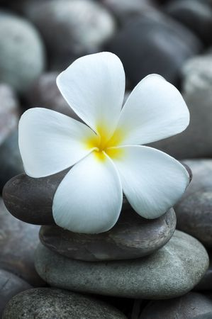 being: White frangipani and therapy stones.