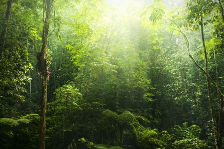 mystical forest: Green forest with ray of light.
