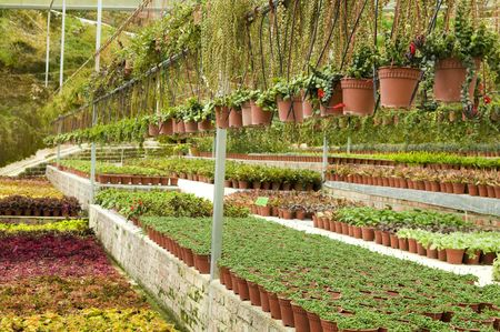 Many plant selling in greenhouse. photo