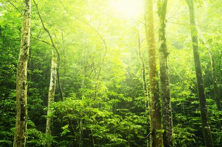 Tropical green forest landscape with ray of light. photo