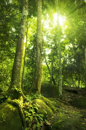 Green forest with ray of light. photo