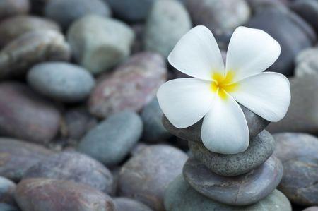 Close up white frangipani and therapy stones photo