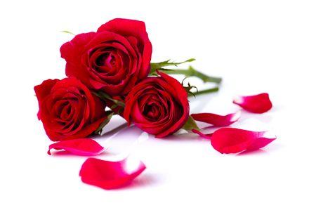 Bild von Rosen und Blütenblätter auf weißem Hintergrund.