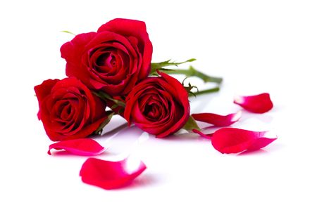 Image of roses and petals on white background. photo