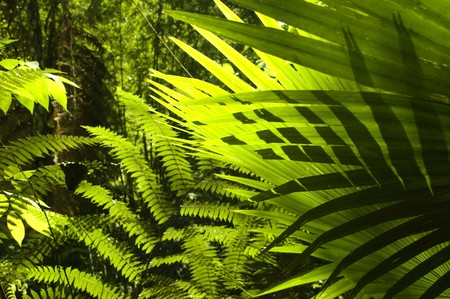 Sun shining to the palm leaf in tropical forest. photo