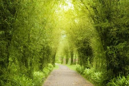 A path leading into a tropical garden. photo