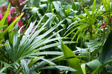 tropical rainforest: Close up view on tropical garden