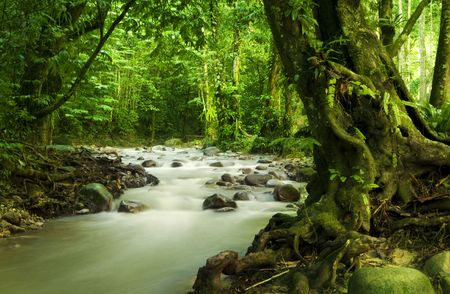 Tropical rainforest and river at Selangor State, Malaysia, Asia. photo
