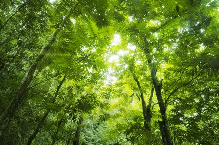 thru: Sunbeam shine thru the green forest