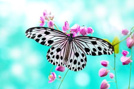 cerca: Close up mariposa de papel de arroz en flor rosa