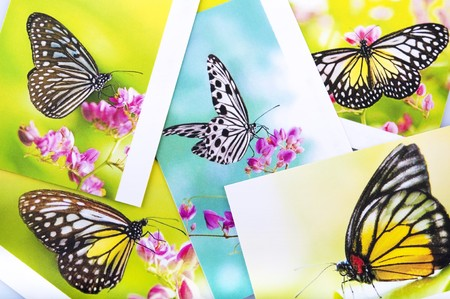 Stack of butterfly postcard, All image belongs to me. photo