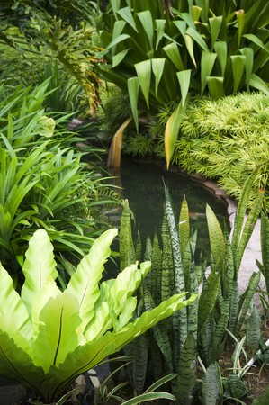 Tropical garden with fish in pond and various plants. photo