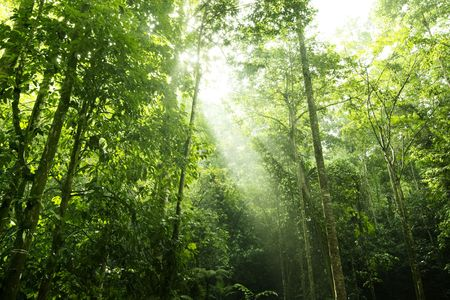 Sunbeam shine thru the tropical green forest photo