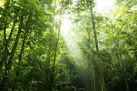 dense: Sunbeam shine thru the tropical green forest