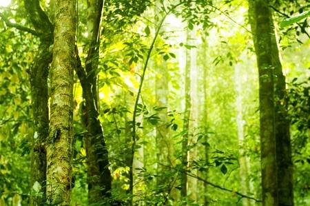 foresta: Tropicale fitta foresta con la luce solare mattina splendere su di esso.